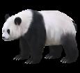 Panda adulte - robe 65