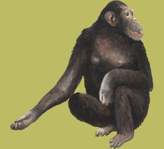 Recueillir un animal de la jungle d'espèce chimpanzé