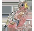 Perruche verte bébé - robe 72