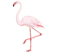 Flamant rose adulte - robe 68