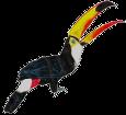 Toucan adulte - robe 1340000006