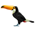 Toucan adulte - robe 46