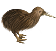 Kiwi ##STADE## - robe 52