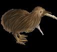 Kiwi adulte - robe 52
