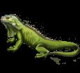 Iguane adulte - robe 72