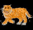 Tigre adulte - robe 1340000004