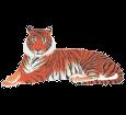 Tigre adulte - robe 1340000005
