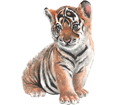 Tigre bébé - robe 42