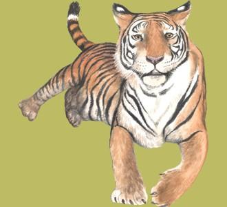 Recueillir un animal de la jungle d'espèce tigre