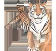 Tigre ##STADE## - robe 42
