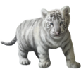 Tigre blanc bébé - robe 9