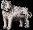 Tigre blanc adulte - robe 9