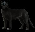 Panthère noire adulte - robe 51