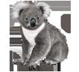 Koala adulte - robe 52