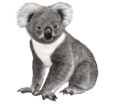 Koala ##STADE## - robe 52