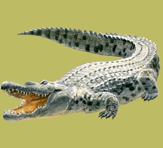 Recueillir un animal de la jungle d'espèce crocodile